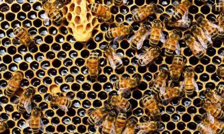 Bijenvereniging Oosterhesselen doet mee aan imkerijdagen