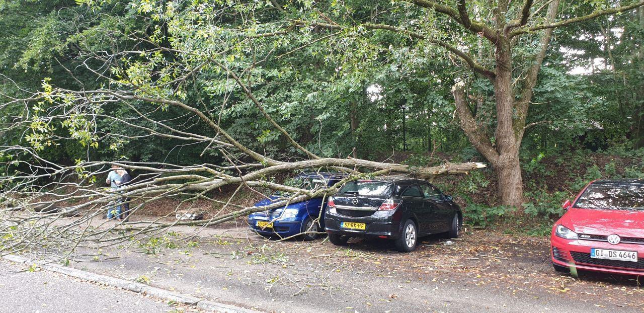 Auto's  beschadigd door afgebroken tak