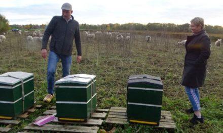 Bijenstal Ossehaar zorgt voor vergroening én verbinding