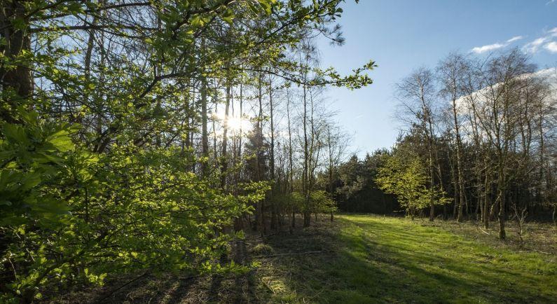 Natuurbegraafplaats in stilte geopend
