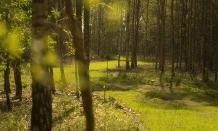 Natuurbegraafplaats Mepperdennen houdt rondleidingen