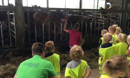 Vleesveebedrijf De Til houdt 'Vraag-maar-raak-rondleidingen'