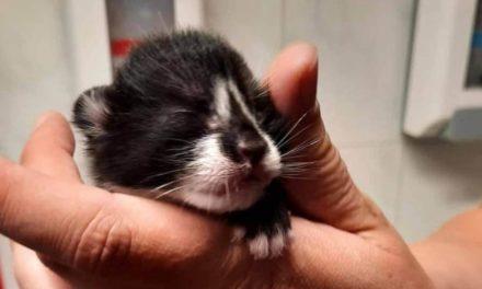 Krat met moederpoes en kittens gevonden