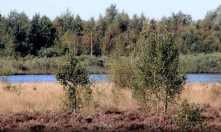 Staatsbosbeheer houdt avondwandeling in boswachterij Gees
