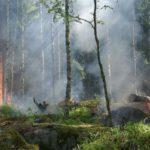 Veiligheidsregio schaalt natuurbrandrisico op
