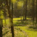 Luisterwandelingen op natuurbegraafplaats Mepperdennen