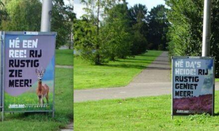Reeën en heide in het park?