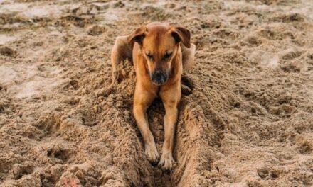Hondenspeeltuin Pets Place gaat niet door