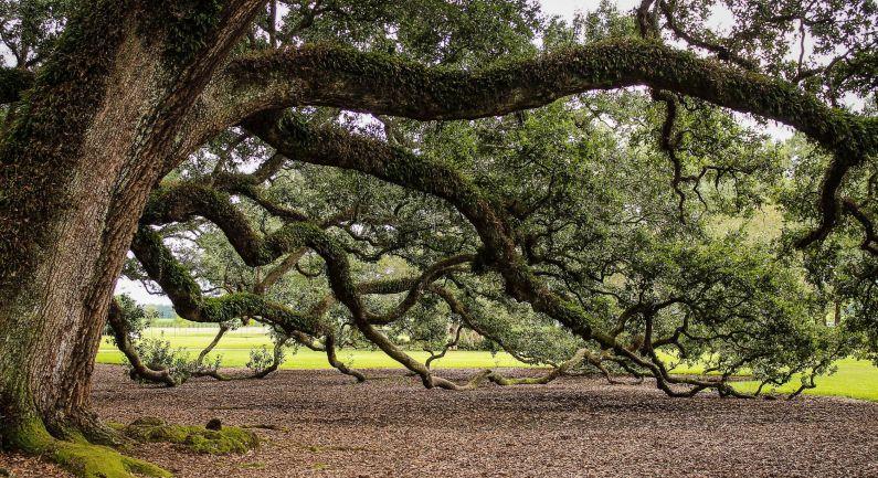 Bomen hebben het zwaar: forse ingrepen nodig