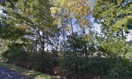 Gemeente start onderhoud bomen en singels