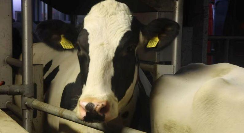 Jonge boeren kunnen subsidie voor verduurzaming aanvragen