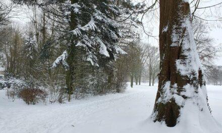 Sneeuw zorgt voor mooie aanblik