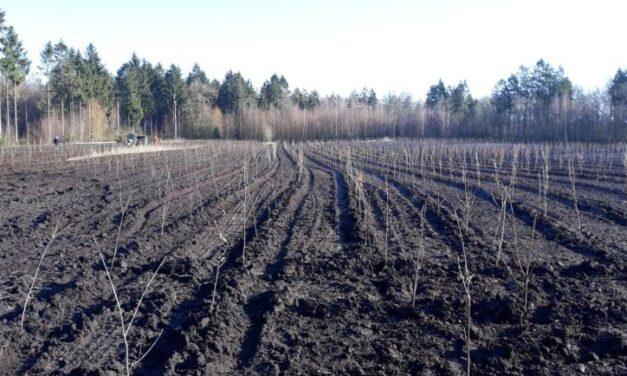 Staatsbosbeheer plant 3,2 hectare bos in Boswachterij Gees
