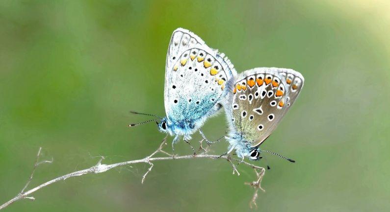 Wie heeft ideeën voor biodiversiteit?