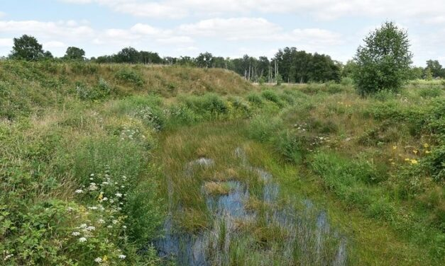 Pilot klimaatbestendiger waterbeheer in Weijerswold